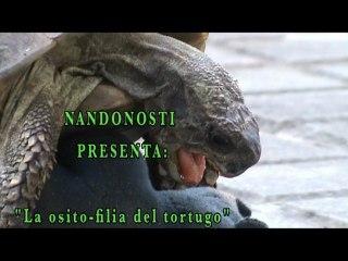 La osito-filia del tortugo