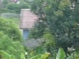 Bolivie - Coroico, c'est quoi, le cri du coq ? (3)