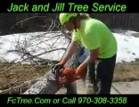 Fort Collins CO | Tree Trimming Stump-Removal-Prunning Servi