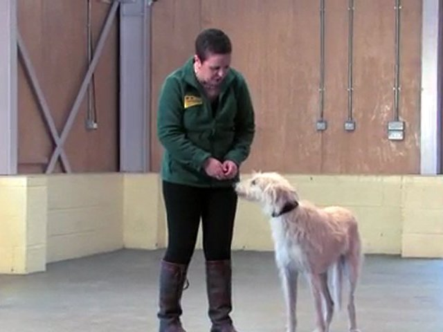 Dog Training Made Easy: Walking on the lead