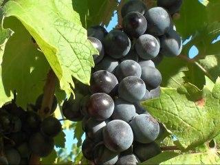Château Grand Boise - Le domaine viticole