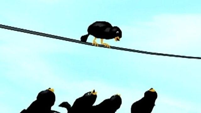Blackbirds Unplugged