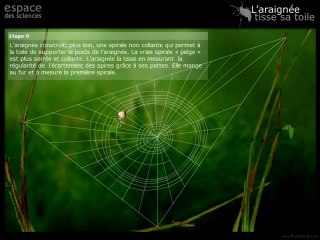 L'araignée tisse sa toile