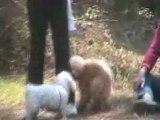 Interactions entre chiens 160410 - Balade Ton Chien