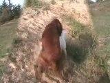 Balade Ton chien au Bois sochard - 300410