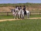 Institut du Cheval et de l'Equitation Portugaise - 2010