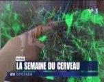 Reportage France 3 12/13 : Semaine du Cerveau en Côte d'Azur