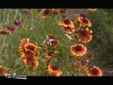 """Jardins secrets, Secrets de jardins"" 2010"