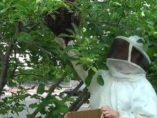 Dallas Bee Removal