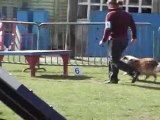 Concours agility Orchies 2010