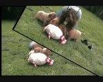 chiots Dogues de Bordeaux 5 semaines