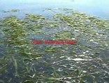 Lake and Pond Water Weed Cutter