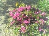 Les fleurs: un trésor de notre nature.