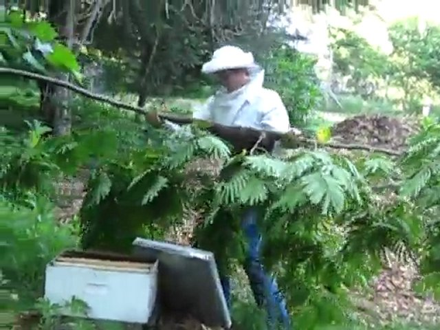 Eno Commons Beekeeping – Catching the Swarm Part 2