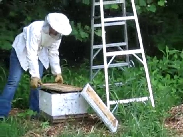Eno Commons Beekeeping – Stragglers Part 3
