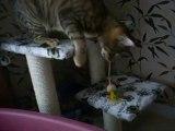kirikou et son arbres a chat