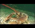 Pêche sous-marine en Normandie