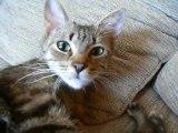 mes chats, année 2009