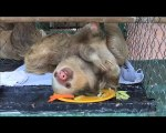 [Vimeo-11712103] Meet the sloths