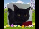 Visite chez les chats du refuge des Amis des Bêtes