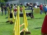 Tao agility 1 Trophée par équipe Limoges 2010