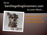 Best San Diego Dog Groomers