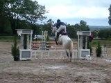 Un beau cheval gris