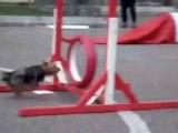 Tarbes - Parcours agility en ville pour les chiens