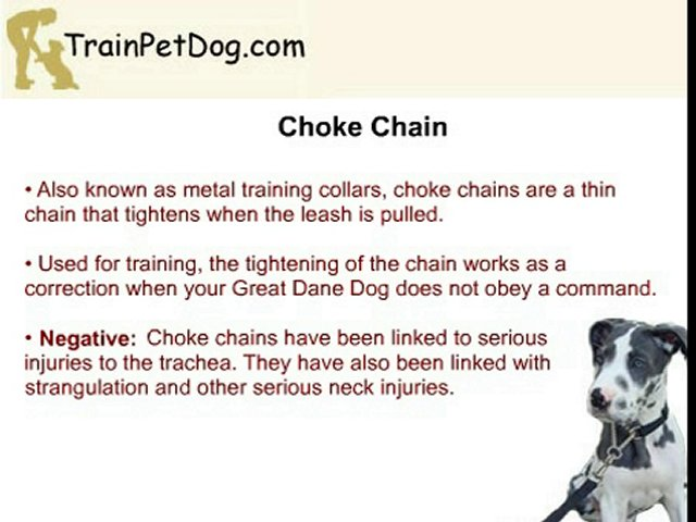 Different Training Collars for Your Great Dane Dog
