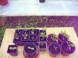 astuce jardin mini serre pour pieds de tomate
