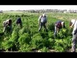 Rachel Corrie  SHIP   OF  FREEDOM -Towards GAZA-FROM IRELAND