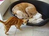 Câlin chien chat