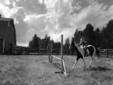 CSO et courses de chevaux