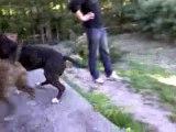 Electra (12 mois) et Dzeus (17 mois) au jardin