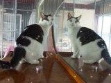 Les chats du refuge des Amis des Bêtes Aix les Bains