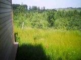 Center Parcs - Centerparcs - Trois forêts - Moselle Lorraine