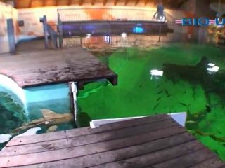 BIO-UV Aquariums, Organic Swimming Pools, Fish Farming