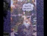 L'amour d'un Chat - Pow Wow - Le Chat