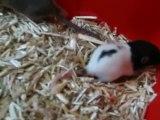 Bébés rats en sortie (1)