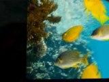 Scuba Diving Florida Keys - Florida Keys Scuba Diving Guide