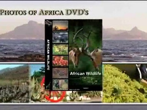 Photos of Africa DVD's - South Africa Travel Channel