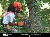Une centaine d'arbres abattus à Miribel-Jonage (Rhône)