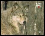 Le mythe du Loup Garou (2)