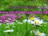 Patrimoine de France - Jardin Des Plantes