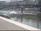 Lacher de colombes - Lyon - Inauguration Darse de Lyon