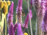 Free HD and SD Stock Footage of Purple Flowers
