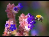 Fleurs et insectes-1-