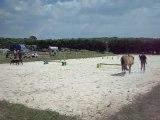 Beauceron et cheval