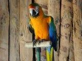 Papagei der Show im Wildgehege Hellenthal