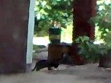 Black Cat Steals Food